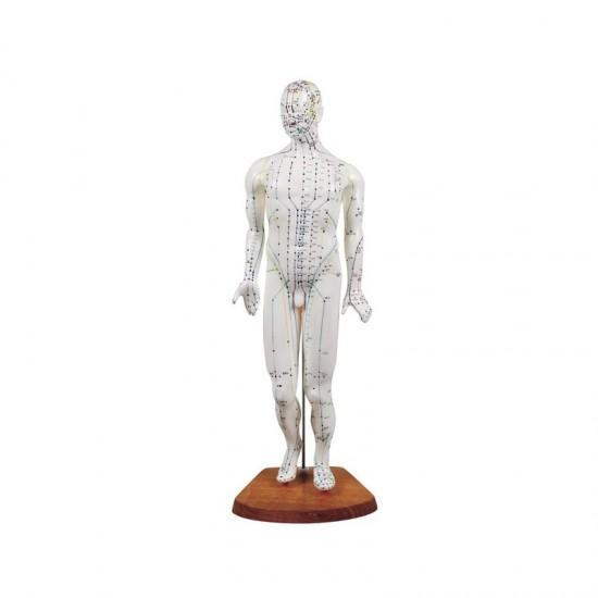 Анатомичен модел на тяло с акупунктурни точки