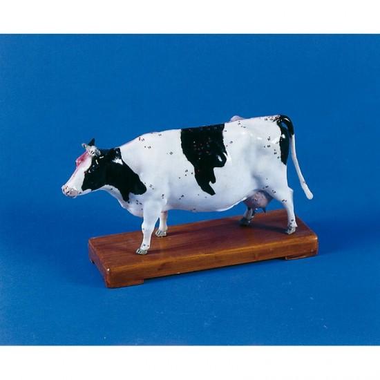 Макет на крава с акупунктурни точки