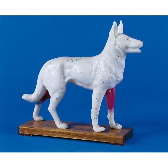 Макет на куче с акупунктурни точки