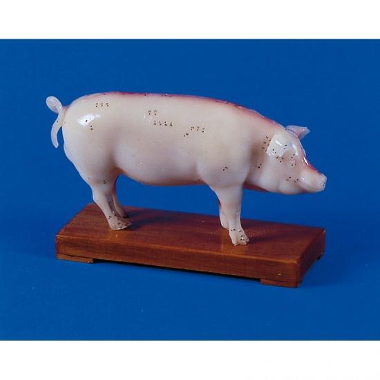 Макет на прасе с акупунктурни точки